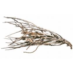 Desert Branch, Wüstenzweig ca. 50-70cm